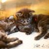 ©Magdalena Koziol, +48 606757001, info@kotdoskonaly.pl, www.kotdoskonaly.pl