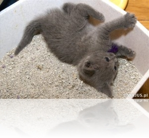 Kot Załatwia Się Poza Kuwetą