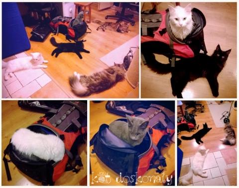 kot-w-plecaku