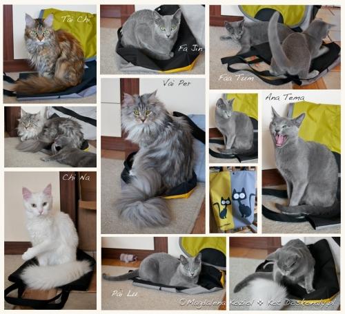 kot-i-wytrzeszcz-min